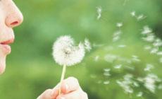 Allergie-primavera